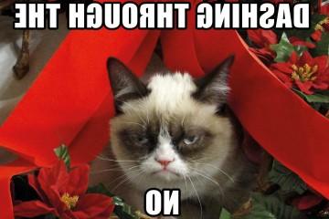Funny-Cat-Christmas
