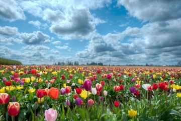 Field-of-Flowers
