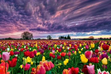 Field-of-Flowers3