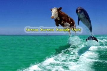 Dolphin-Cow