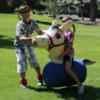 pony-hops-web-2